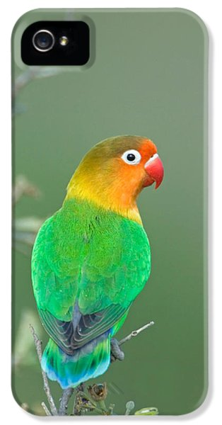Lovebird iPhone 5s Case - Close-up Of A Fischers Lovebird by Panoramic Images