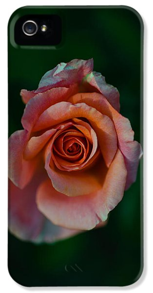 Close-up Of A Pink Rose, Beverly Hills IPhone 5s Case