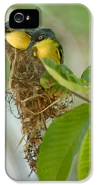 Flycatcher iPhone 5s Case - Close-up Of Two Common Tody-flycatchers by Panoramic Images