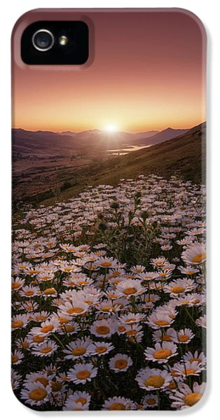 Daisy iPhone 5s Case - Closer To The Sun by Sergio Abevilla