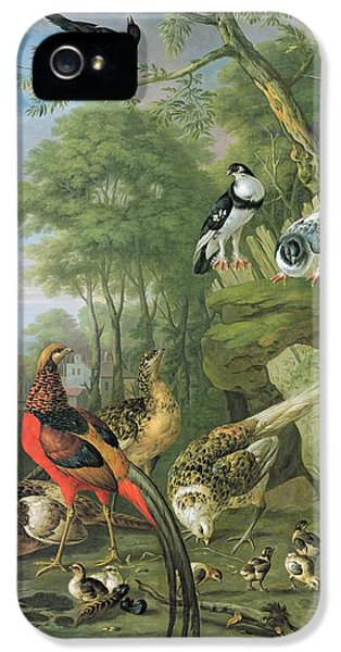 Magpies iPhone 5s Case - Cock Pheasant Hen Pheasant And Chicks And Other Birds In A Classical Landscape by Pieter Casteels