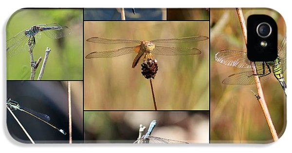 Collage Marsh Life IPhone 5s Case