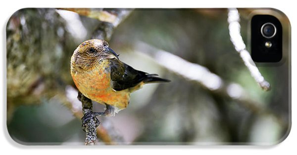 Crossbill iPhone 5s Case - Common Crossbill Female by Dr P. Marazzi