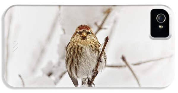 Finch iPhone 5s Case - Common Redpoll by Susan Capuano