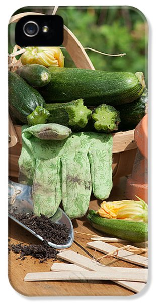 Garden iPhone 5s Case - Courgette Basket With Garden Tools by Amanda Elwell
