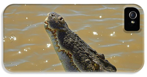 Crocodile iPhone 5s Case - Crocodile Jumping Out Of The Water by David Wall