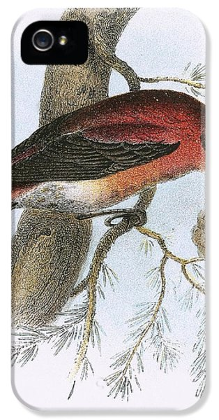 Crossbill iPhone 5s Case - Crossbill by English School
