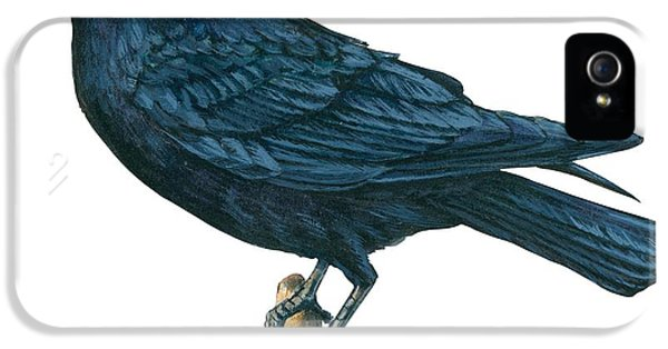 Crow IPhone 5s Case by Anonymous