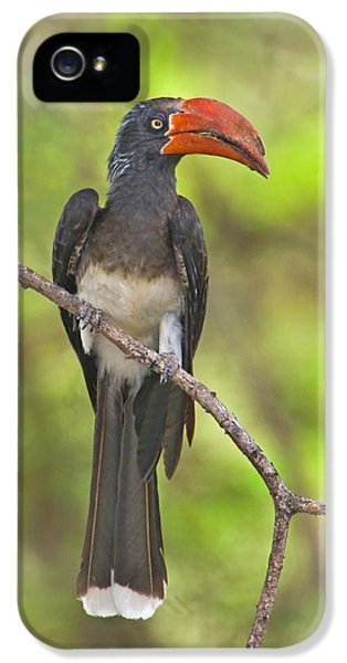 Hornbill iPhone 5s Case - Crowned Hornbill Perching On A Branch by Panoramic Images