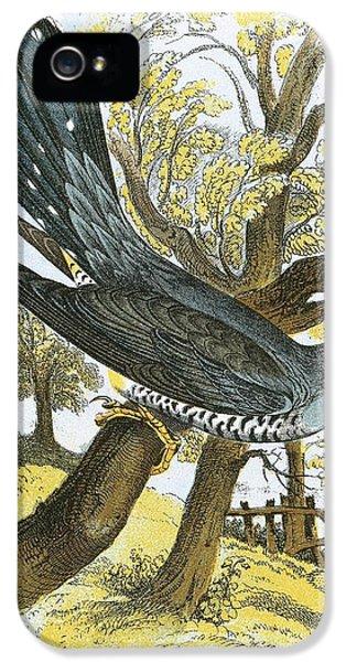Cuckoo iPhone 5s Case - Cuckoo by English School