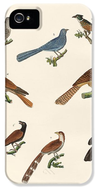 Cuckoos From Various Countries IPhone 5s Case