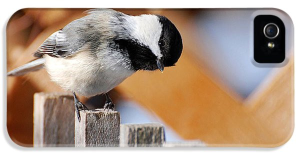 Curious Chickadee IPhone 5s Case by Christina Rollo