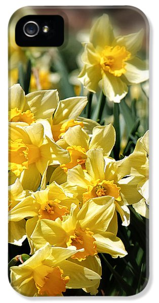 Daffodil IPhone 5s Case by Bill Wakeley
