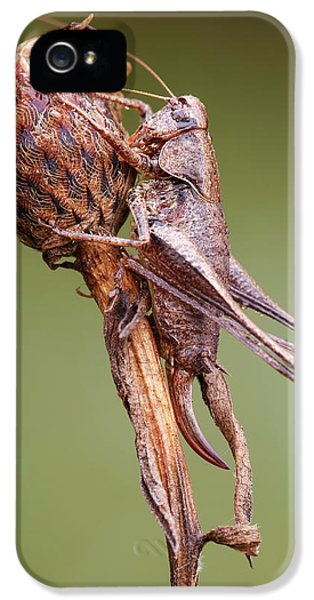 Dark Bush Cricket IPhone 5s Case by Heath Mcdonald