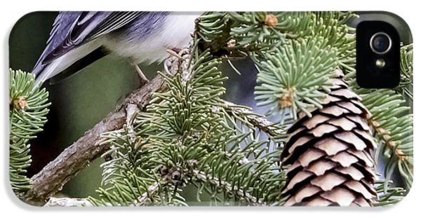 Dark-eyed Junco Speaks Out IPhone 5s Case by Ricky L Jones