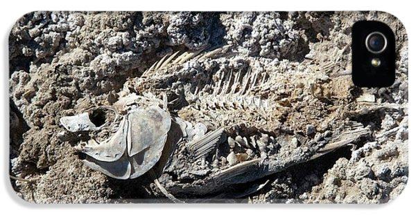 Sonny iPhone 5s Case - Dead Fish On Salt Flat by Jim West