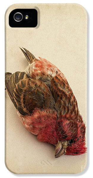 Crossbill iPhone 5s Case - Death Of The Innocent by Edward Fielding
