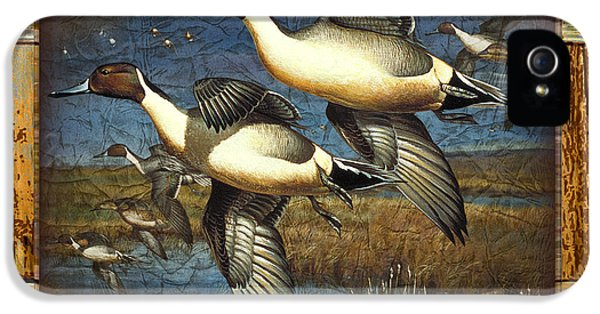 Duck iPhone 5s Case - Deco Pintail Ducks by JQ Licensing