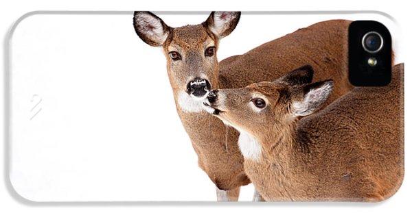 Deer Kisses IPhone 5s Case by Karol Livote