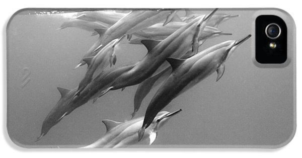 Dolphin Pod IPhone 5s Case by Sean Davey