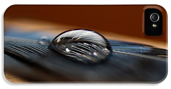 Bluejay iPhone 5s Case - Drop On A Bluejay Feather by Susan Capuano