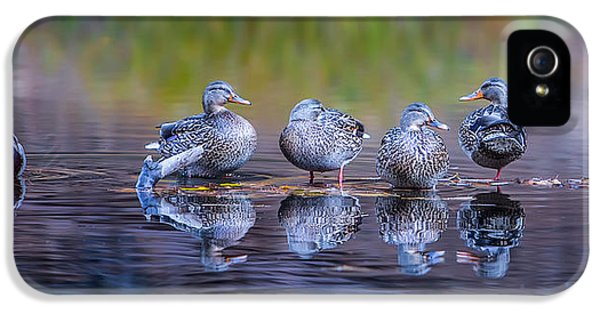 Ducks In A Row IPhone 5s Case by Larry Marshall