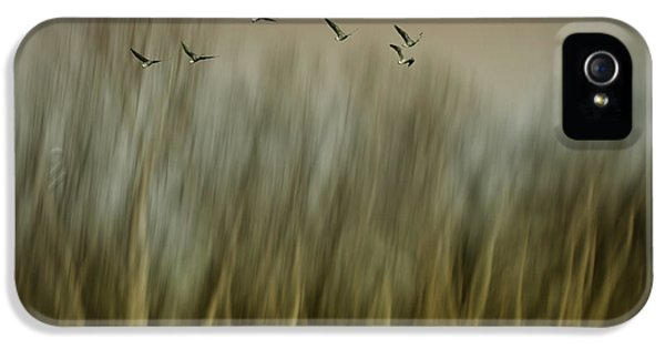 Goose iPhone 5s Case - Early Spring Vision... by Yvette Depaepe