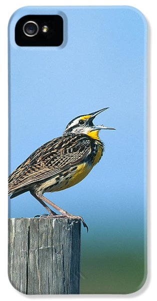 Eastern Meadowlark IPhone 5s Case by Paul J. Fusco