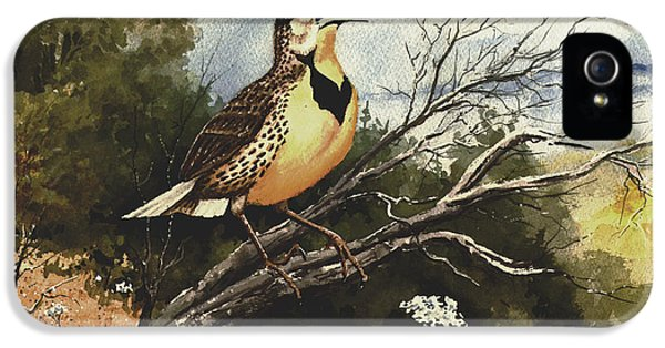 Meadowlark iPhone 5s Case - Eastern Meadowlark by Sam Sidders