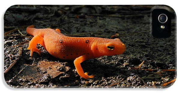 Eastern Newt Red Eft IPhone 5s Case