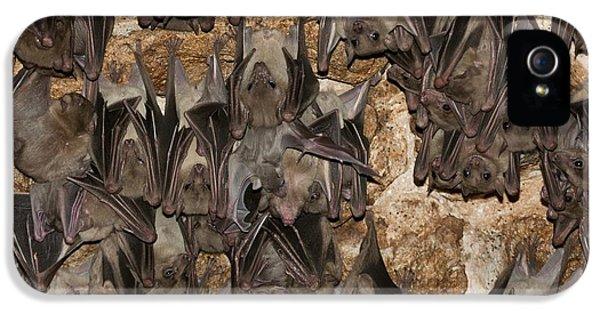 Egyptian Fruit Bat Rousettus Aegyptiacus IPhone 5s Case