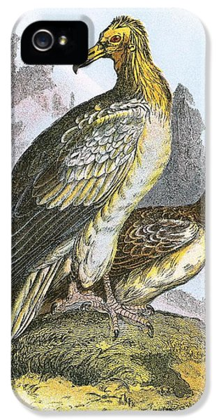 Egyptian Vulture IPhone 5s Case by English School