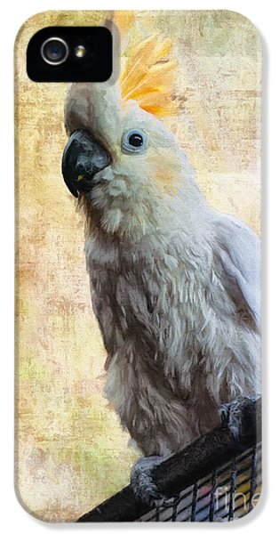 Cockatoo iPhone 5s Case - Elegant Lady by Lois Bryan