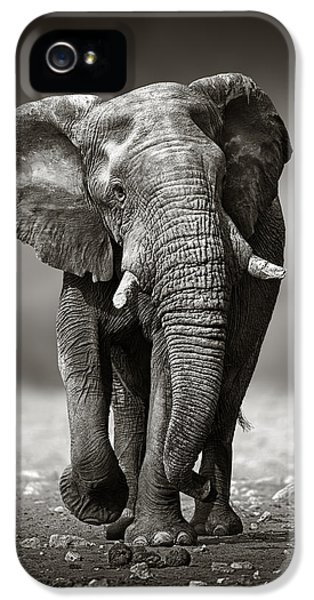 Animals iPhone 5s Case - Elephant Approach From The Front by Johan Swanepoel