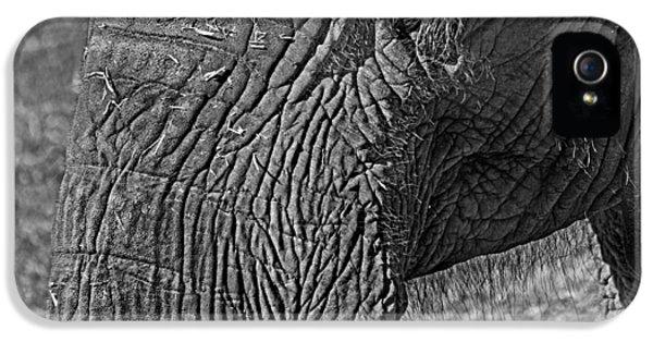 Elephant.. Dont Cry IPhone 5s Case by Miroslava Jurcik