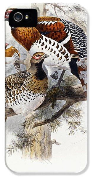 Pheasant iPhone 5s Case - Elliot's Pheasant by Joseph Wolf