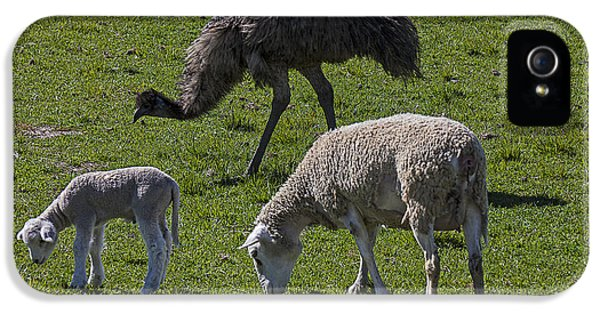 Emu iPhone 5s Case - Emu And Sheep by Garry Gay
