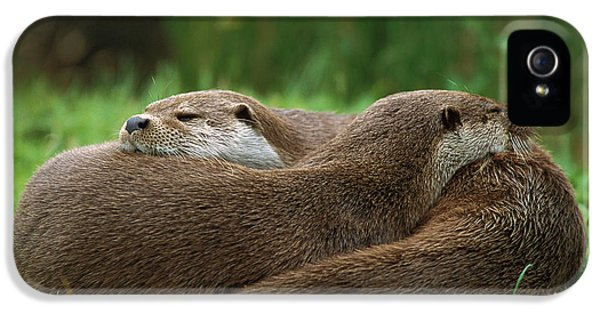European River Otter Lutra Lutra IPhone 5s Case by Ingo Arndt