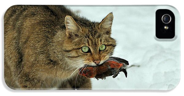 Crossbill iPhone 5s Case - European Wildcat by Reiner Bernhardt