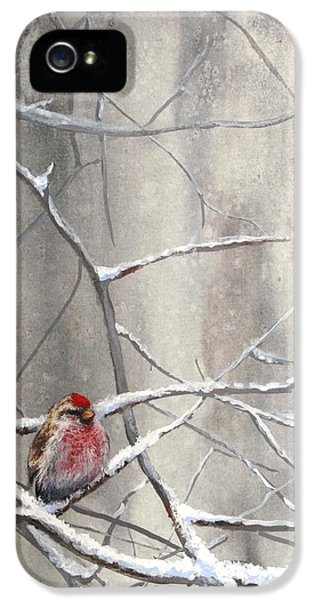 Crossbill iPhone 5s Case - Eyeing The Feeder Alaskan Redpoll In Winter by Karen Whitworth
