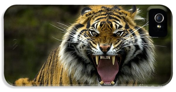 Eyes Of The Tiger IPhone 5s Case by Mike  Dawson