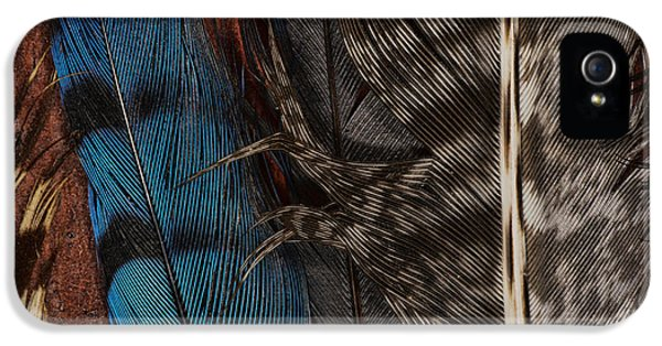 Bluejay iPhone 5s Case - Feather Collection by Susan Capuano