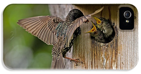 Feeding Starlings IPhone 5s Case