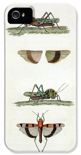 Field Crickets IPhone 5s Case by General Research Division/new York Public Library