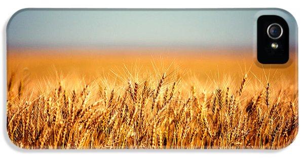 Rural Scenes iPhone 5s Case - Field Of Wheat by Todd Klassy