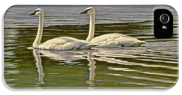Swan iPhone 5s Case - First Open Water - Trumpeters by Paul Krapf