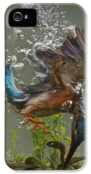 Kingfisher iPhone 5s Case - Fisherman by Ray Cooper