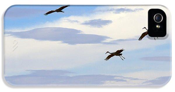 Flight Of The Sandhill Cranes IPhone 5s Case