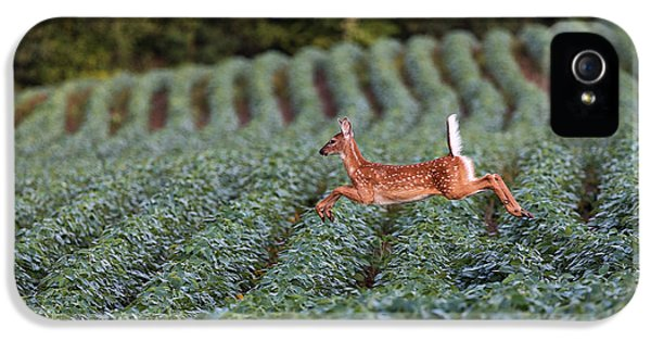 Flight Of The White-tailed Deer IPhone 5s Case by Everet Regal