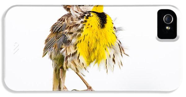 Meadowlark iPhone 5s Case - Flluffy Meadowlark by Bill Swindaman